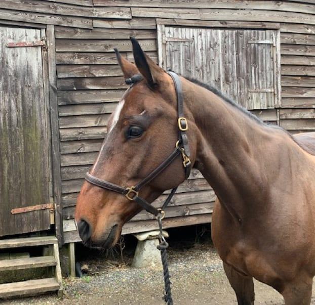 horse-2