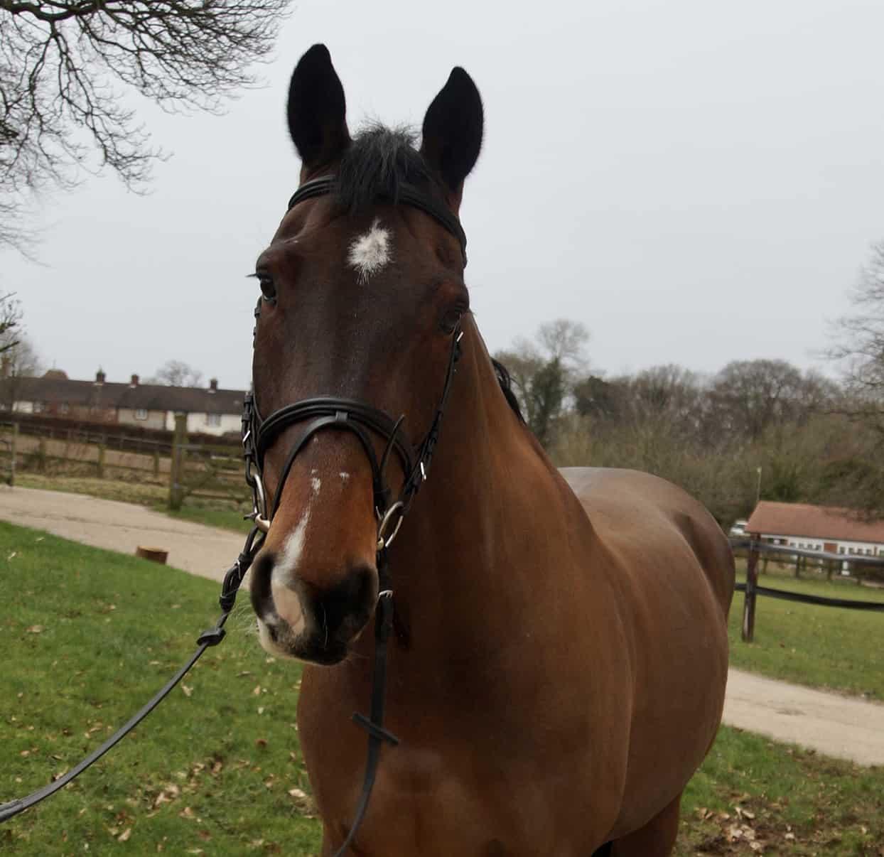 horse-4 Vinnie
