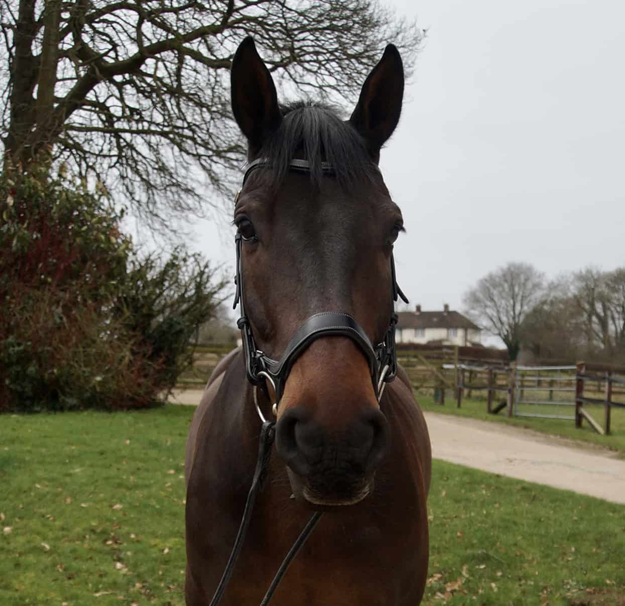 horse-5 Tom